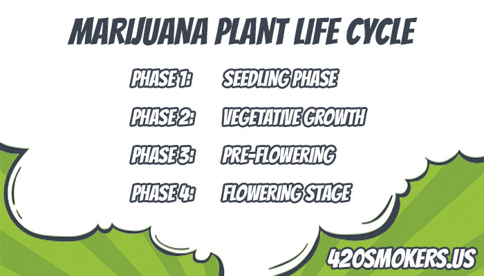 stages of growing marijuana plants
