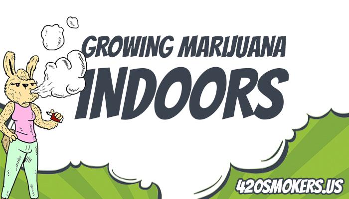 rabbit smoking weed bud, growing cannabis indoors