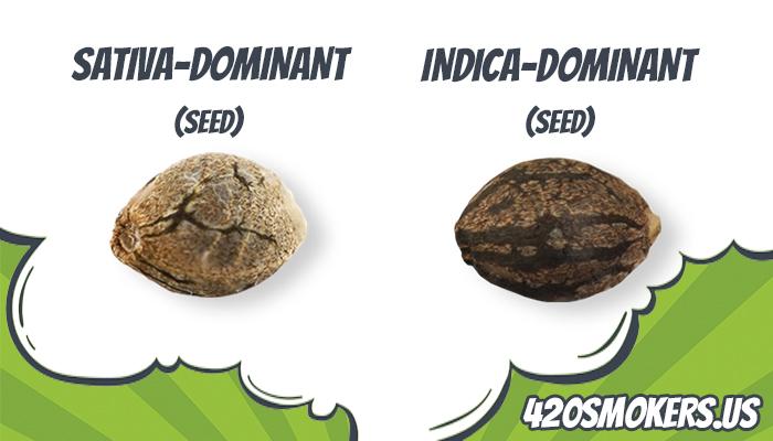 sativa and indica dominant marijuana seeds for easy indoor growing
